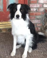 This is Tim the Border Collie, a movie dog from the animal talent agency Performing Animal Troupe. | As an animal actor Ernie the hound dog works on movies, television, commercials, photo shoots and other productions. | We have experienced studio dog trainers and wranglers.
