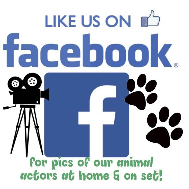 Like us on Facebook for pictures and videos of our animal actors on set, behind the scenes and relaxing at home. |  https://www.facebook.com/performinganimaltroupe