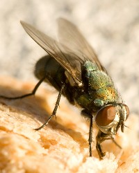 Flies available through animal talent agency Performing Animal Troupe. | We provide flies, bees, honeybees, wasps and other bugs and insects for television, commercials, photo shoots and other productions. | We have experienced bug and insect wranglers.