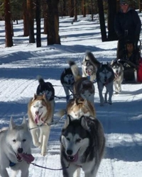 This is a working sled dog team from the animal talent agency Performing Animal Troupe. | They work on movies, television, commercials, photo shoots and other productions.  |  We can also provide dog-sleds, harnesses, equipment and experienced drivers. | We have experienced studio dog trainers and wranglers.